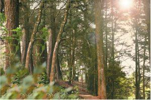 area boscosa